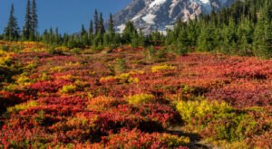 When And Where To Expect Washington's Fall Foliage To Peak This Year