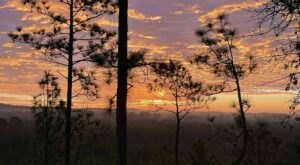 The Backbone Trail In Louisiana Takes You From Forests to Vista Views And Back