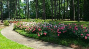 Stop And Smell Over 20,000 Roses At This Unique Garden In Louisiana
