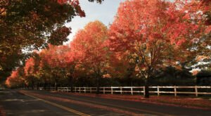 Take A 2-Hour Drive Through Oregon To See This Year's Beautiful Fall Colors