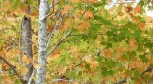 When And Where To Expect Florida's Fall Foliage To Peak This Year