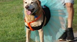 By Your Side 5k & Fun Run Is A Unique Dog-Friendly Destination In Oklahoma Perfect For An Outdoor Adventure