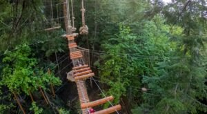 Enjoy An Exhilarating Tree Top Adventure At Washington's Top Aerial Park