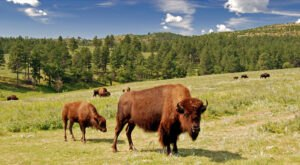 Some People Say Custer State Park Is So Special, It Should Become America's Next National Park