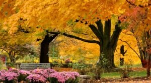 When And Where To Expect Indiana's Fall Foliage To Peak This Year
