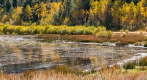 When And Where To Expect Nevada's Fall Foliage To Peak This Year