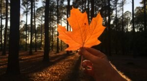 When And Where To Expect Mississippi's Fall Foliage To Peak This Year