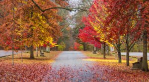 When And Where To Expect New Jersey's Fall Foliage To Peak This Year