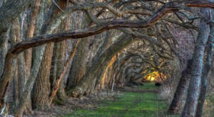 There's Nothing Quite As Magical As The Tunnel Of Trees You'll Find At Wye Island NRMA In Maryland