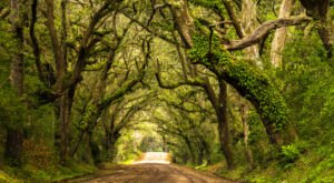 There's Nothing Quite As Magical As The Tunnel Of Trees You'll Find At Botany Bay In South Carolina