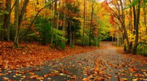 When And Where To Expect West Virginia's Fall Foliage To Peak This Year