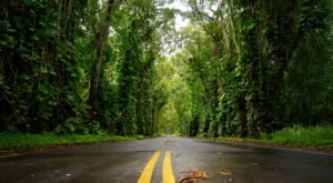 There's Nothing Quite As Magical As The Tunnel Of Trees You'll Find At Kauai's Tree Tunnel In Hawaii