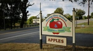 The Cider Slushies From Morning Glory Orchard In Tennessee Are Very Refreshing