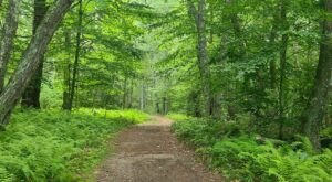 These 7 Easy Loop Trail Hikes Will Show You All Of The Natural Beauty Rhode Island has to offer