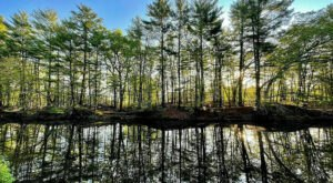 The Mine Falls Green Trail Loop In New Hampshire Takes You From The River To The Woods And Back
