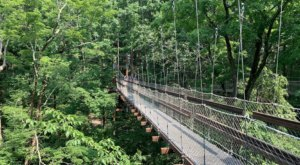 One Of The Longest Elevated Canopy Walks In Ohio Can Be Found At Holden Arboretum