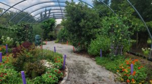 The Butterfly House In Virginia That's The Perfect Family Destination