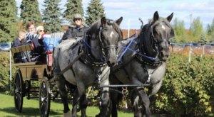 Fantail Farm In Michigan Offers Fantastic Horse-Drawn Wagon Rides In Every Season
