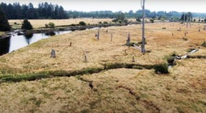 The Ghost Forest Along The Washington Coast You Have To See To Believe