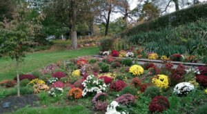 The Mums Will Soon Be In Bloom At Beautiful Seamon Park In New York