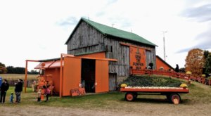 A Visit To Gene The Pumpkin Man In Michigan Will Bring Your Fall Decor Dreams To Life