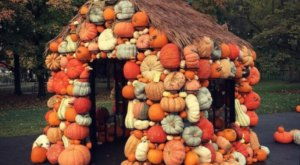 Meander Through Hundreds Of Pumpkins, Gourds, And Fall Flowers At Ohio's Charming Harvest Blooms Exhibit