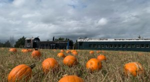 The Pumpkin Patch Express Train Ride In South Carolina Is Scenic And Fun For The Whole Family