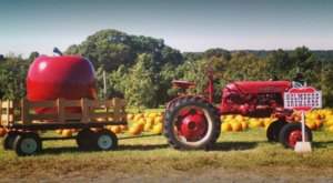 This Charming Apple Orchard In Connecticut Is Picture Perfect For A Fall Day
