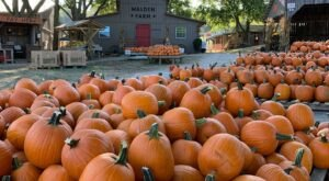 Pick Your Own Pumpkins This Fall At The Walden Pumpkin Farm Near Nashville