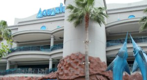 The Downtown Aquarium In Texas Has Officially Been Named One Of The Best In The Country