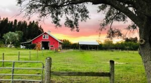 Relax And Connect With Nature When You Spend The Night In A Private Farm Barn In Florida