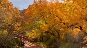 Arizona's Oldest And Largest Botanical Garden, Boyce Thompson Arboretum, Has Some Of The Most Dazzling Fall Foliage In The State