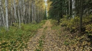 Hike The Skyline Ridge After Hours Trail And Watch The Leaves Change In The Aspen Forest In Alaska