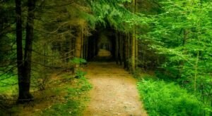 The Seneca Creek Trail Features A Tunnel Of Trees In West Virginia And It's Positively Magical