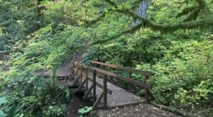 Take An Easy Loop Trail To Enter Another World At McDonald Forest In Oregon
