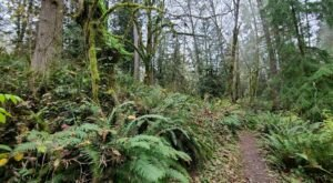 The Four Cedars Outer Loop In Washington Takes You From The Forest To The Lake And Back
