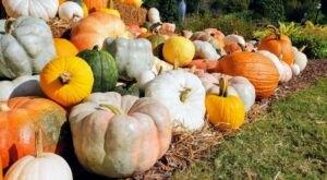 Enjoy Scarecrows, Pumpkins, Nature Walks And More At This Alabama Garden Festifall
