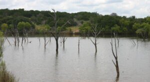 The Ghost Forest At This Texas State Park You Have To See To Believe