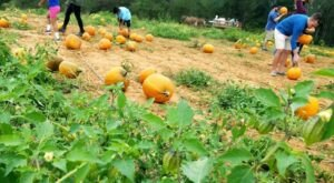 Old Baker Farm In Alabama Was Recently Named The Best Place To Pick A Pumpkin This Fall