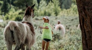 Hike With Llamas At Rocky Mountain Llama Treks At Rocky Mountain National Park In Colorado