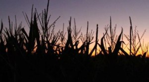 We Dare You To Enter The Most Haunted Corn Maze In Texas This Halloween