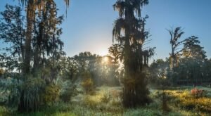 This Swamp Nature Park Will Offer You A Hidden Glimpse Into The Wetlands And Woodlands Of Georgia