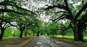 Get Your Nature Fix Strolling The Scenic Audubon Park Loop In New Orleans