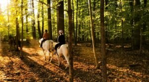 Take A Fall Foliage Trail Ride On Horseback At Juckas Stables In New York