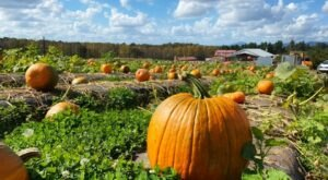 Jaemor Farms In Georgia Has Over 70-Acres Of Pumpkins Waiting To Be Picked