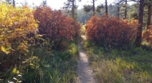 EnjoyFall In Southern Colorado At The Beautiful Nature & Wildlife Discovery Center