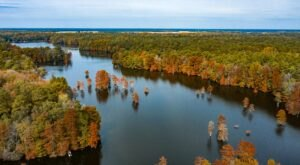 Trap Pond State Park Is The Perfect Place For A Fall Camping Getaway In Delaware