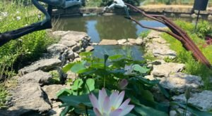 Escape To Your Very Own Oasis When You Explore The Overland Park Arboretum & Botanical Gardens In Kansas