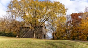 Take A Fall Foliage Trail Ride On Horseback At Natchez Trace Stables In Tennessee