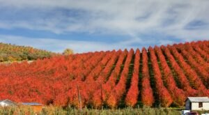 9 Reasons Why Fall Is Actually The Best Time To Visit Chelan, Washington
